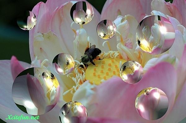 poze_cu flori