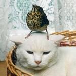 Turturica vs pisica