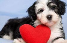 Cum tratam cateii care sufera de  afectiuni cardiace